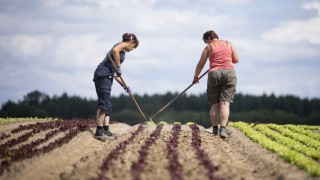 Organic Food Production Reaches Record Level