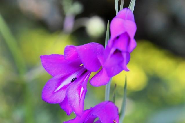 Andechs Orchideen- Wanderung
