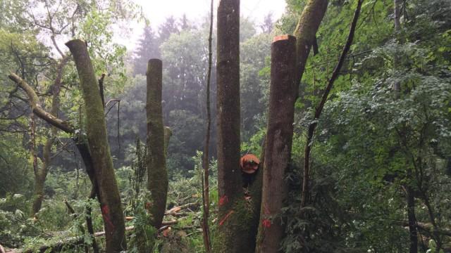 Zorneding Zerstörung im Forst