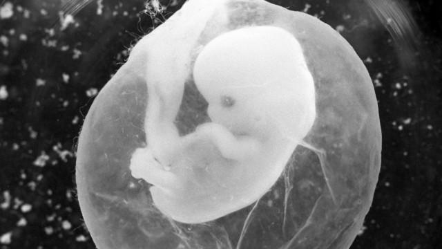Standesbeamte wollen Abschaffung des Leihmutterschaftsverbots