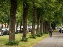 Bäume an der Gotthardstraße in München