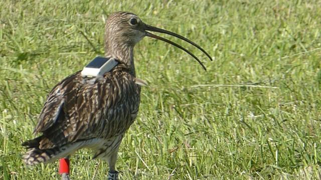 Umwelt und Naturschutz in Bayern SZ-Vogel