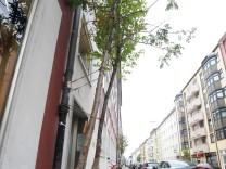 """Wanderbaumallee von """"Green City"""" in der Heßstraße in München, 2012"""