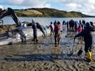 Matrosen retten gestrandeten Wal (Vorschaubild)