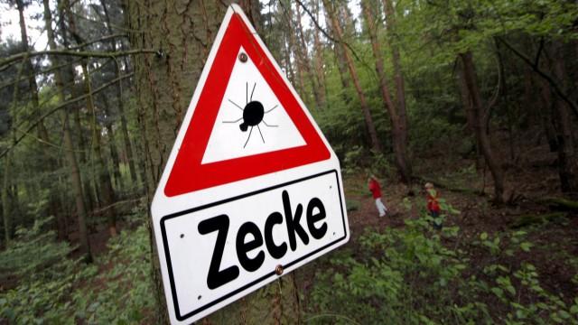 Borreliose-Fälle Zecken Bayern