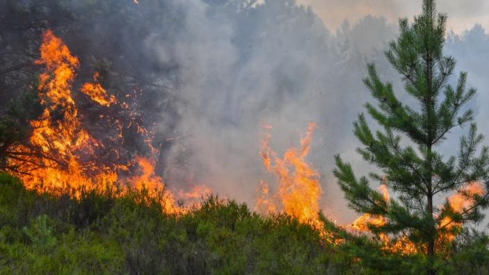 Erneutes Feuer in der Lieberoser Heide
