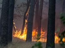 Brandenburg: Waldbrand bei Potsdam 2018