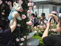 Rosengarten Japan Touristen