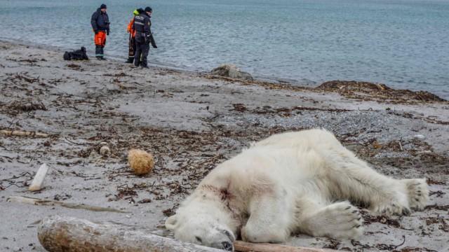 Tiere Erschossener Eisbär