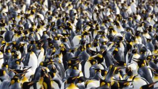 Artenvielfalt Tiere der Welt