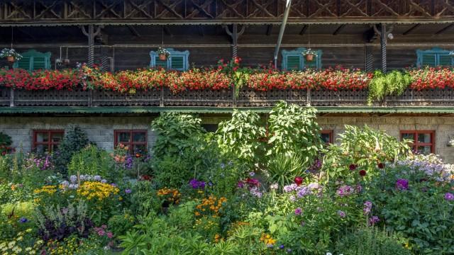 Altes Bauernhaus in Holzbauweise Balkon mit Geranien Pelargonium spec geschmückt davor ein Blum