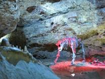 Teufelshöhle Pottenstein - Höhlenbär; Teufelshöhle Pottenstein - Höhlenbär