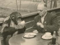 Der Tiergarten Straubing wird 80 Jahre alt: Zoodirektor Hans Schäfer und der Schimpanse Jimmy