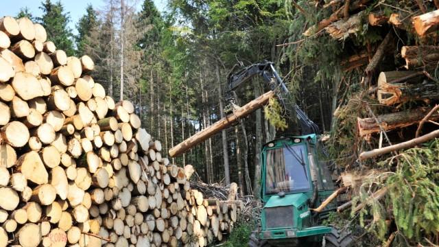 Perchting Abforsten von Borkenbefallenen Bäumen