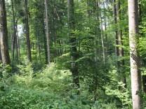 Der kälteste Ort im Ebersberger Forst.
