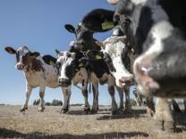 Dürre bringt Landwirte in Schwierigkeiten