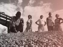 Afrika: Arbeiter auf einer Kakao-Plantage