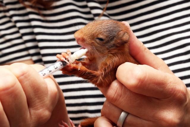 Tierkinder im Tierheim; Hochbetrieb im Starnberger Tierheim