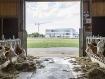 Kühe haben noch reichlich Platz auf dem Hof von Robert Lechner in Sauerlach.