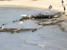"""Dürre lässt 123 Jahre altes Schiffswrack """"auftauchen"""" (Vorschaubild)"""