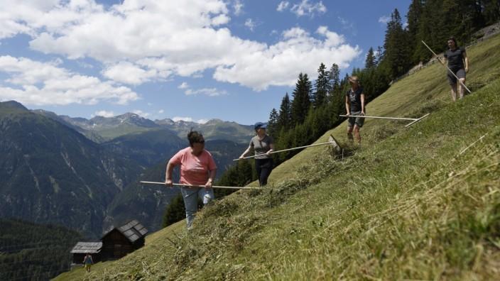 Touristen bei der Heumahd