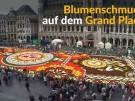 Blumenteppich begeistert Brüssel (Vorschaubild)