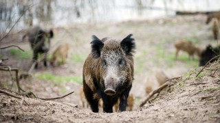Zahl gejagter Tiere im NRW-Staatswald gestiegen