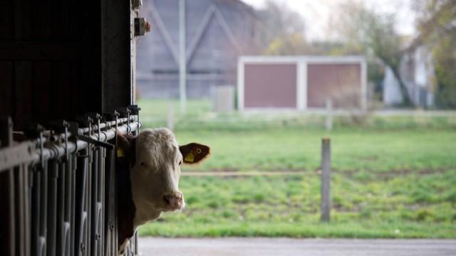 Führung am Tierzucht- und Tierhaltungsstandort Grub
