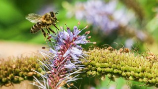 Bienen Artenschutz Volksbegehren