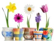 Berufseinsteiger Einheitsbrei ohne Individualität Blumentopf, iStock