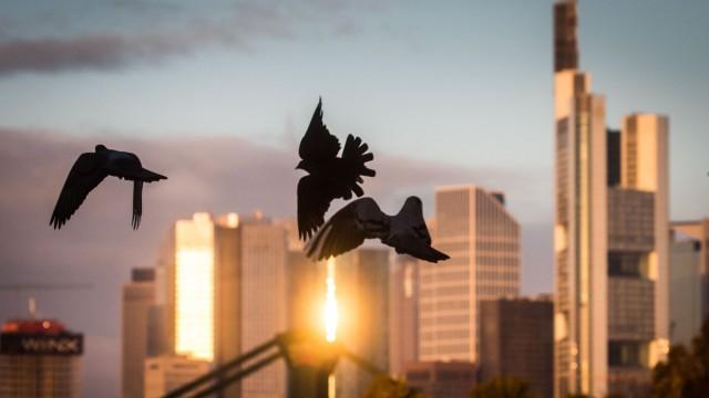 Tauben vor Skyline