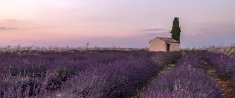 Lavendelfeld in der Provence