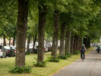 Bedrohte Straßenbäume in München, 2018