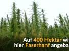 Gemeinde will Hanf-Kurbad einrichten (Vorschaubild)