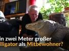 Ein Alligator als Mitbewohner (Vorschaubild)