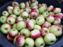 Apfel-Sammlung