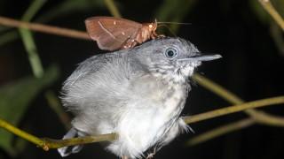 Amazonas Motten Die Tranen Von Vogeln Trinken Wissen