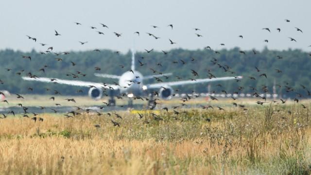 Wildlife Control am Flughafen Frankfurt