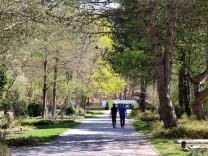 Bäume und Sträucher überwuchern Gräber; Auf dem Friedhof