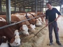 Landwirt Hermann Tausend kümmert sich um die Kühe auf seinem Hof