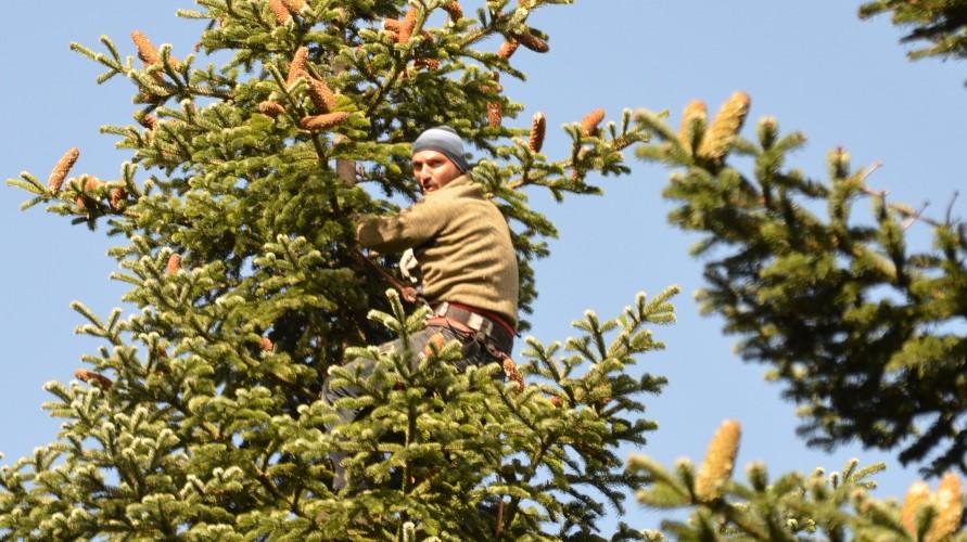 Weihnachtsbaum Samen.Georgien Wipfelstürmer Im Weihnachtsbaum Reise Süddeutsche De