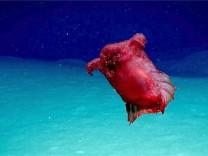 'Kopfloses Hühnermonster': unbekannte Spezies entdeckt