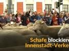 Schafe blockieren spanische Hauptstadt (Vorschaubild)