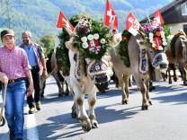 23 09 2017 Giswil Kanton Obwalden Schweiz Alpabzug Fluonalp Giswil Bild zeigt Aelplerin mit Kuehe