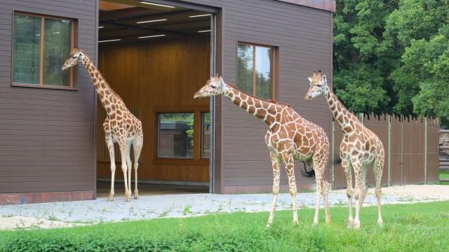 Zoologie Augsburger Zoo