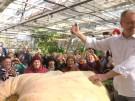 Riesenkürbis für alle (Vorschaubild)