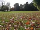 Buntes Herbstlaub wird zur Last für Städte (Vorschaubild)