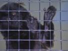 Süßer Krallenaffen-Nachwuchs verzaubert Besucher (Vorschaubild)