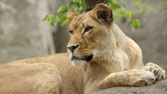Tiere Drama in US-Zoo