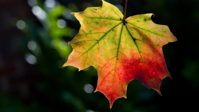 Blätter werden Bunt